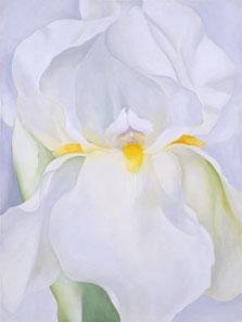 White Iris No. 7, Georgia O'Keeffe